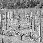 The Vineyard by Dennis Brown