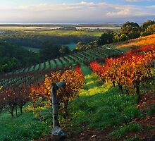 Windy Ridge Winery by Tony Middleton