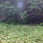 Backyard Orb by intensual