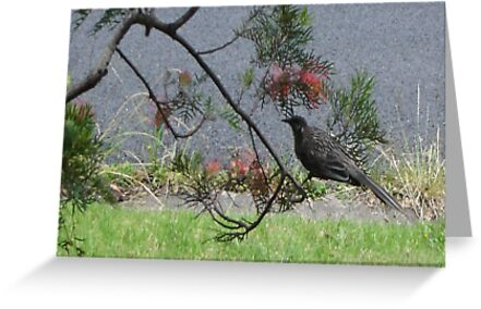 Honeyeater Visit by KazM