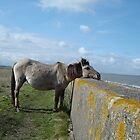 Konik Pony by the Sea by Art Hut