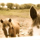Horses In June by EdelPankhurst