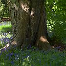 Woodland scene with bluebells by EileenLangsley
