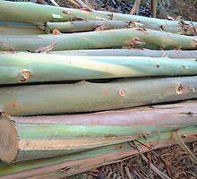 Newly sawn Eucelyptus  Poles by hotpotato
