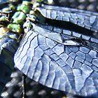 RIP dragonfly by elasita