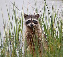 My Furry Friend by Kimberley Mazzoni