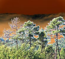 Pines against a moody sky altered image by hotpotato