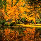 Reflections on the lake at Alfred Nicholas Gardens by Elana Bailey