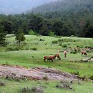 The Herd (please view larger) by SnowyOwl