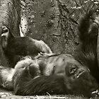 Congo Gorilla by JeanneNewman