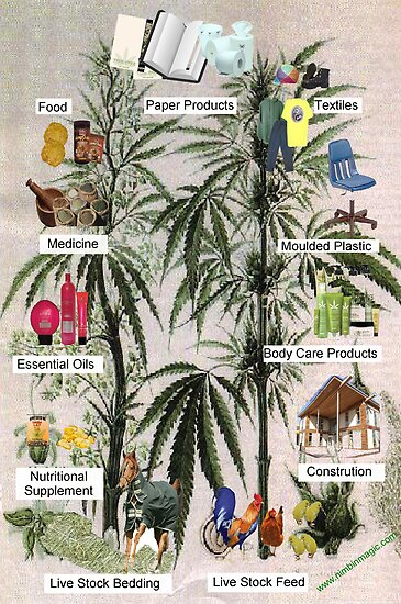 Hemp Product Poster by nimbinmagic