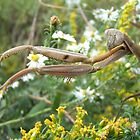 Praying Mantis by jensch8