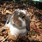 Honey Bunny Playing in the Leaves by jensch8
