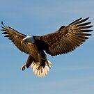 Fly Like An Eagle by akaurora