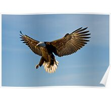 Fly Like An Eagle Poster