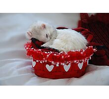 My Basket of Love Photographic Print