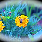 Bee in Colour by Jodie Bennett