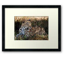 Phinda Leopard portrait Framed Print