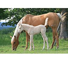 Broodmare and her young foal Photographic Print