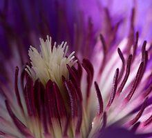a flower's fireworks by Stefan Trenker