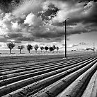 Newly ploughed. by Victor Pugatschew