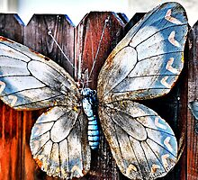 Iron Butterfly Play Fremont? by Bob Wall