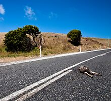 Road kill by Alex Howen