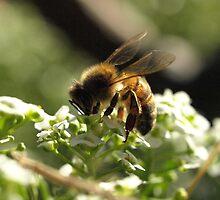 Sweet Nectar  by Jon Staniland