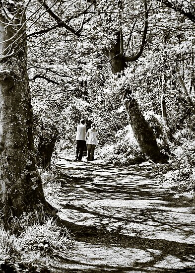 A stroll in the woods by Agnes McGuinness
