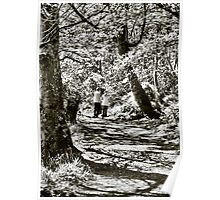 A stroll in the woods Poster
