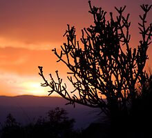 Cholla Sunset #2 by TheBlindHog