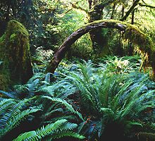 'Hoh Rainforest' by DLUhlinger