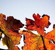 Red, red vine by Mandi Whitten