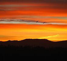 The Magic Hour by laureenr