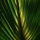 Fronds  by Isa Rodriguez