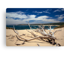 injidup point Canvas Print
