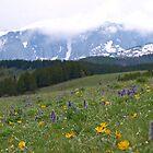 Bighorn Mountains by Dawne Olson