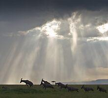 Tsessebe Herd, Masai Mara, Kenya by Craig Scarr
