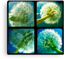 Dandelion Quad TTV Canvas Print