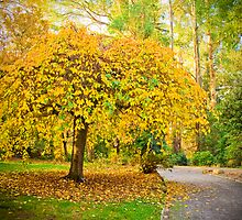 Yellow leaves entice you along the path at Alfred Nicholas Gardens by Elana Bailey