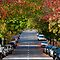 Autumn in Erskineville by Alex Howen