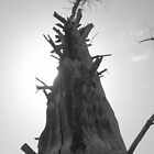 Gnarly old tree by stevedunkley
