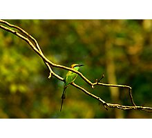 Keep a green tree in your heart and perhaps a singing bird will come. Photographic Print