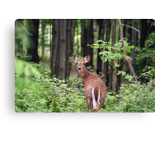 Looking Back At Me Canvas Print