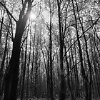 Walk in the Woods B&amp;W by Ian Tilly
