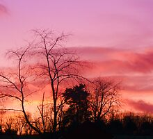 Pink Sky by Blue Skye Art  & Photography