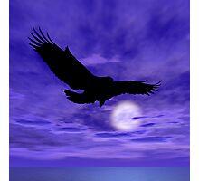 Eagle Flight Photographic Print
