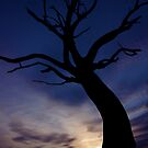 Twisted Silhouette by Paul Moore