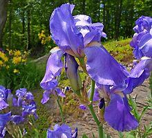 Flowers Beauty by marchello