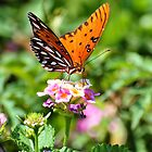 Gulf Fritillary by Jeff Ore